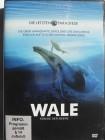 Wale - Könige der Meere - Neufundland, Hudson Bay