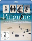 Pinguine [Blu-ray] OVP