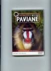 Die geheimnisvolle Welt der Paviane, NEU/OVP