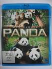 Der Große Panda - Chinas süßes Nationaltier - Bär Sterben