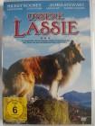 Unsere Lassie - schottischer Collie Hund in Kalifornien
