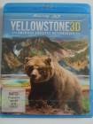 Yellowstone 3D - Amerikas größtes Naturwunder, Grizzly Bären