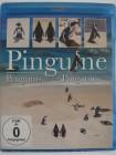 Pinguine am Kap der guten Hoffnung - Penguins, putzige Tiere