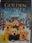 Golden Winter - Hunde Welpen suchen ein Zuhause, Weihnachten