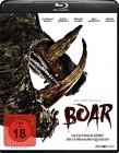 Boar  (uncut)